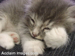 Picture of a Sleeping Kitten