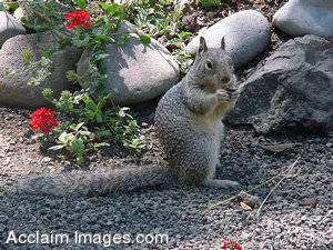 Picture of a Spunky Squirrel