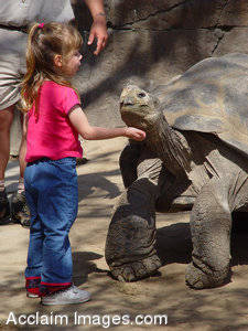 Stock Photo of a Little Girl Petting a Turtle