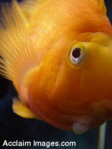 Stock Photography of a Tropical Fish