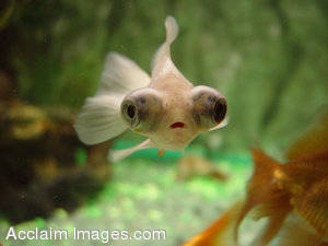 Picture of a Tropical Fish