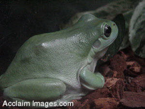Stock Photo of a Frog