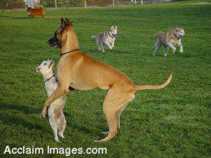 Stock Picture of Two Dogs Playing In a Park