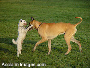Stock Photo of Two Dogs Playing
