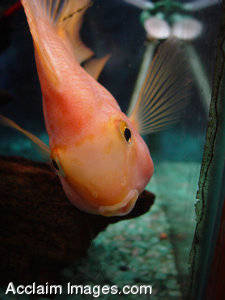 Stock Photo of a Tropical Fish