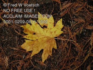 Stock Photo Clipart of a Leaf