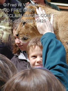 African Lion Cub Pictures and Photos