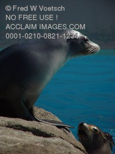 Photos of Seals and Sea Lions