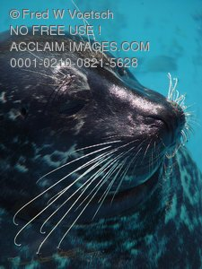 Seal Photos