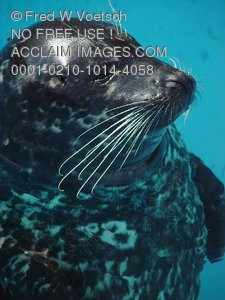 Picture of a Seal
