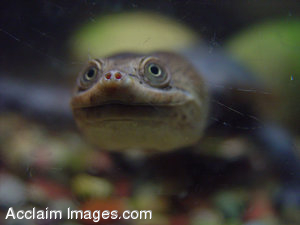 Snake Necked Turtle Stock Clipart Photo