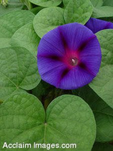 Morning Glory Pictures