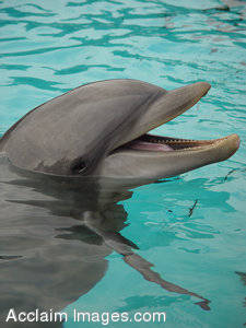 Picture of a Dipsy Dolphin