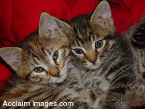 Photograph of two kitties