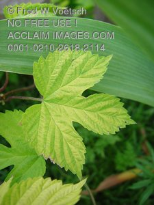 Leaf Photos, Pictures and Photographs