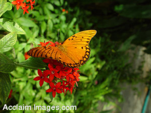Stock Picture of a Butterfly on a Flower