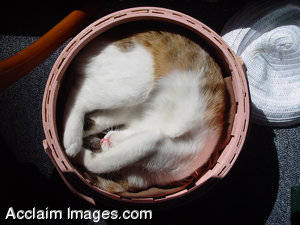 Stock Photograph of a Young Cat Sleeping in a Pink Basket
