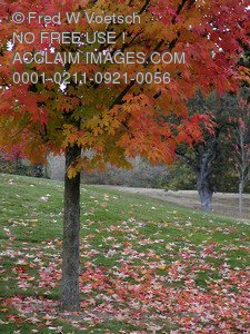 Autumn Colors Pictures, Photos and Photographs