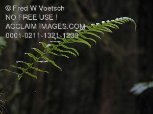 Clip Art Stock Photo of a Fern in a Forest