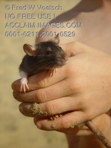 Stock Image of a Boy Holding His Pet Rat