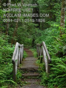 Stock Photo Clip Art of a Path and Bridge Through a Forest