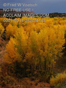 Fall Leaves in Utah - Pictures, Photos, Photographs