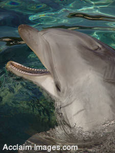 Stock Photo of a Dolphin