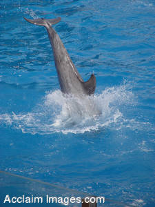 Stock Photography of a Diving Dolphin