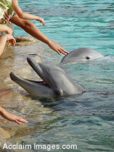 Picture of People Petting Dolphins