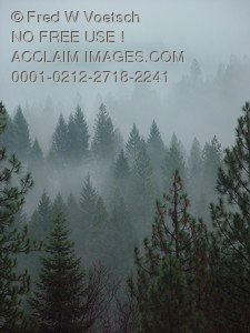 Clip Art Stock Photo of Fog in a Forest
