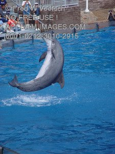 Stock Image of a Dolphin Flipping