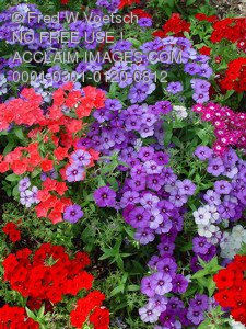 Stock Image of a Colorful Flowerbed