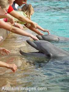 Stock Photography of People Petting Dolphins