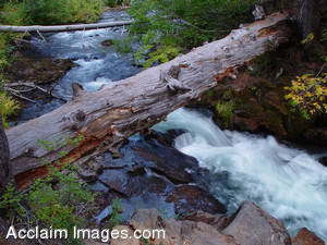 Stock Photo of a Fallen Tree Over the Cascading River of Clearwater