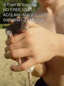 Stock Photo of a Boy Holding a Rat