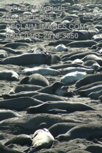 Stock Photo of Seals On The Beach