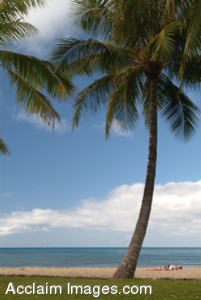 Free Stock Clip Art Photo of Palm Trees in Waikiki