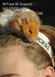 Stock Photo of a Hamster On a Child