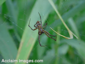 Stock Photography of a Spider on a Spider Web