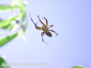 Picture of a Spider on a Spider Web
