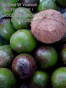 Stock Photo of Tropical Fruit