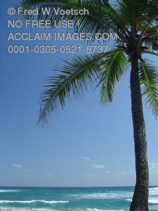 Stock Photo of Palm Tree on Tropical Island