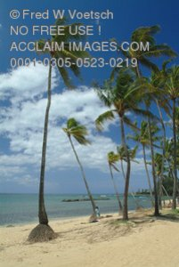 Stock Photo of Palm Trees on The Beach