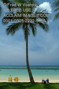 Stock Photo of a Tourist on a Beach Under a Palm Tree