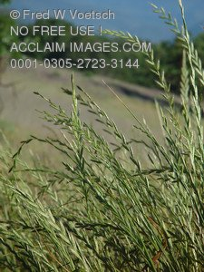 Stock Photo of Wild Grasses in a Field