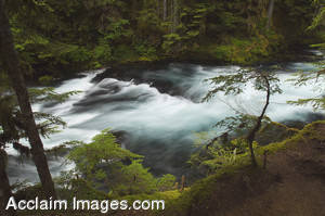Stock Photo of the McKenzie River in Central Oregon