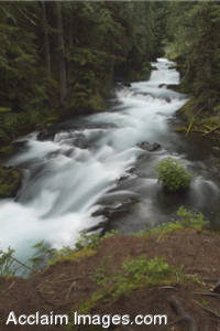 Stock Photo of the McKenzie River