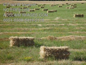 Stock Photo of Bales of Hay in a Field