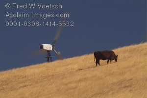 Stock Photo of a Cow on a Wind Energy Farm