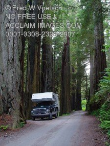 Stock Photo of a Camper in a Redwood Forest